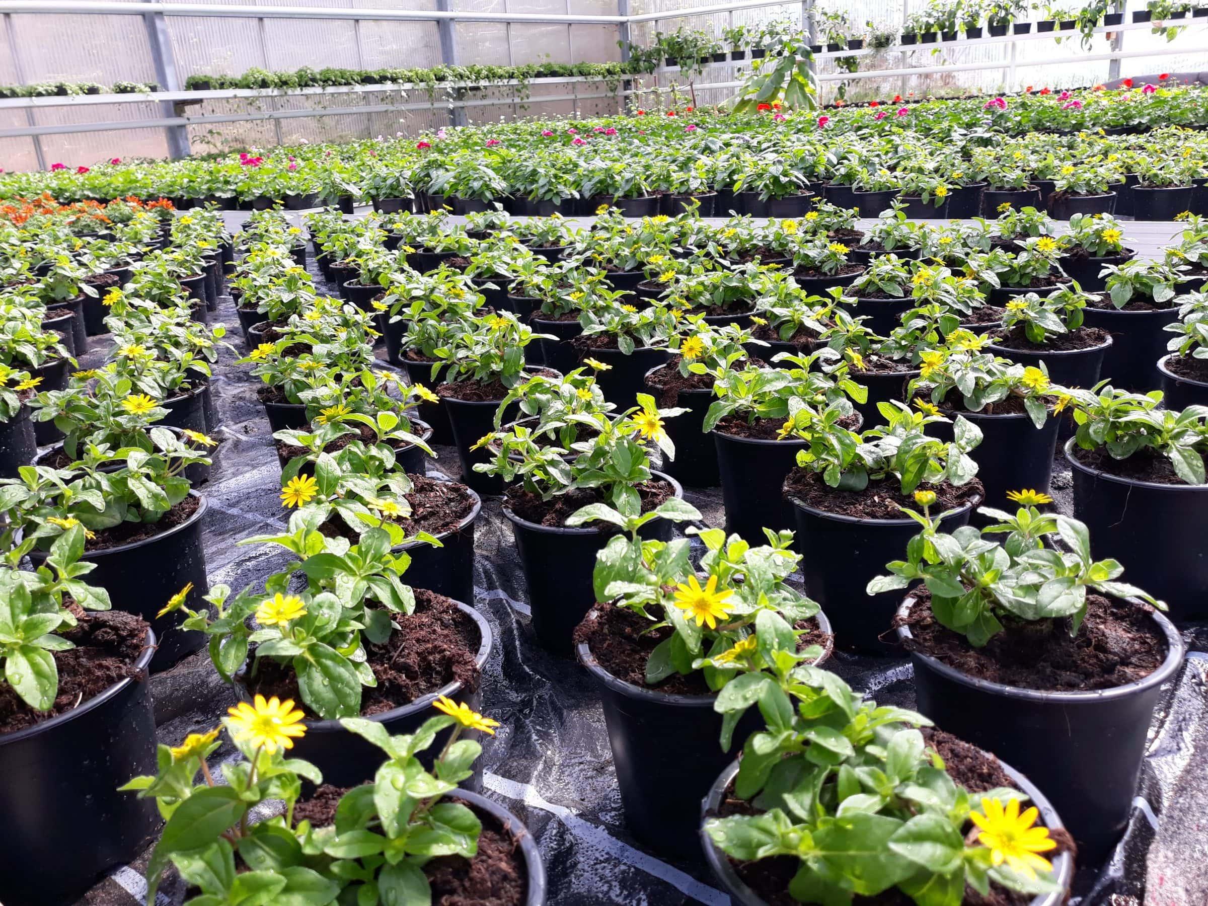 Pflanzentöpfe in Gärtnerei